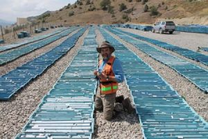 GC & drill core at Mastra Gold mine, NE Turkey